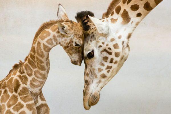familias padres animales 09