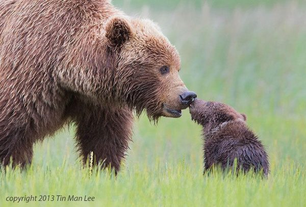 familias-padres-animales-14