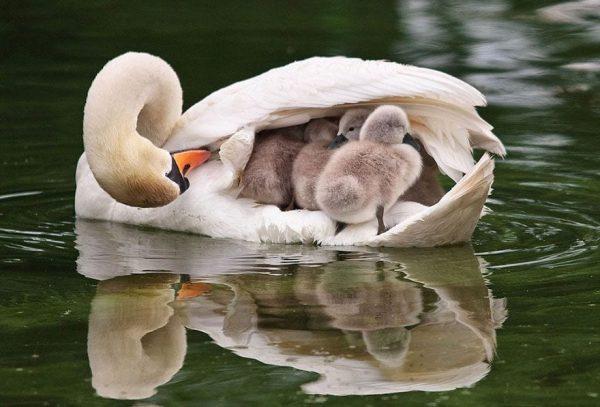 familias-padres-animales-15