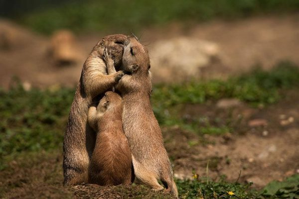 familias-padres-animales-16