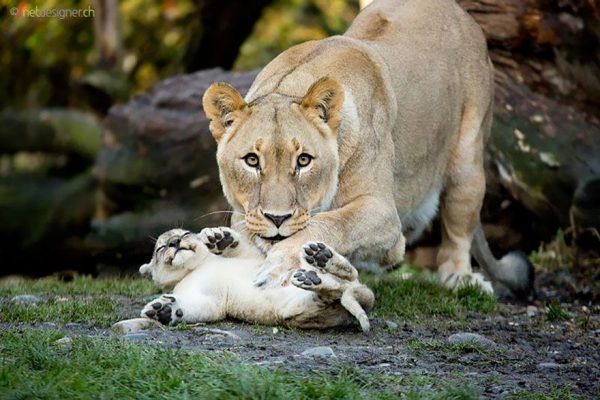 familias-padres-animales-17