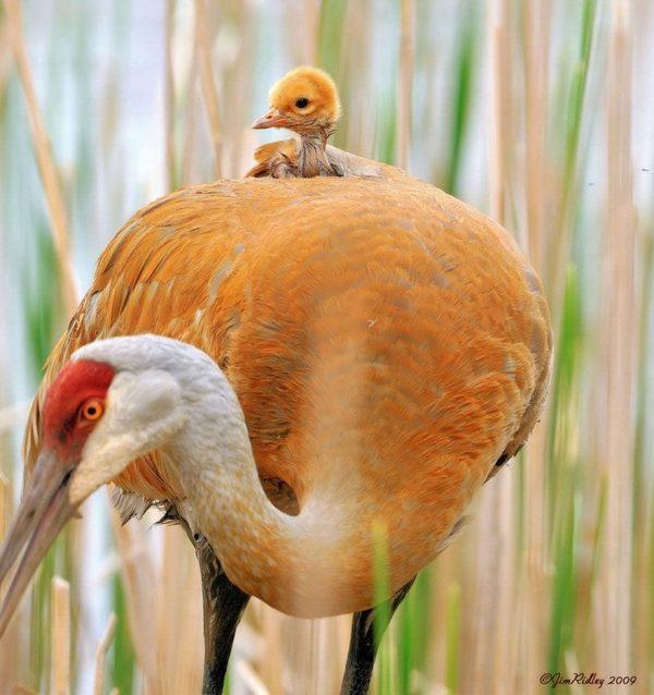 familias-padres-animales-22