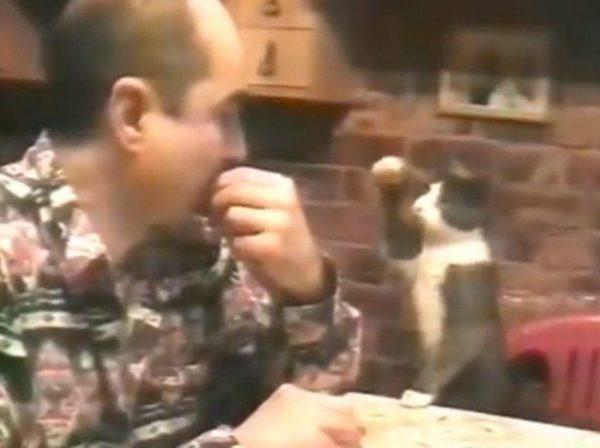 gato lengua signos sordo