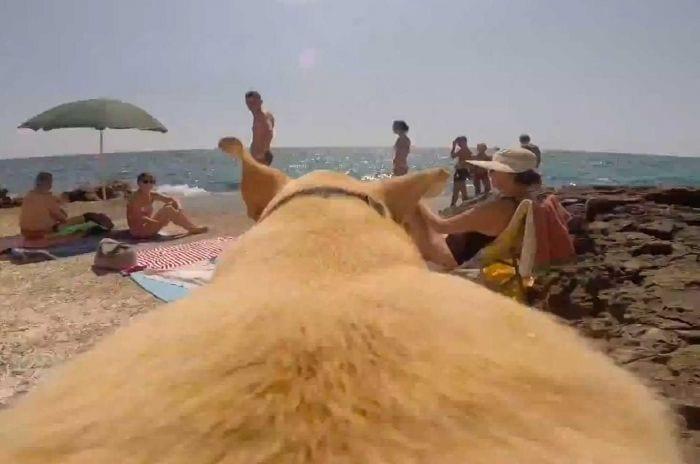 perro corriendo hacia la playa subjetivo