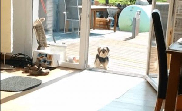 perro no pasa