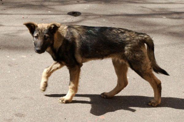 perros-22