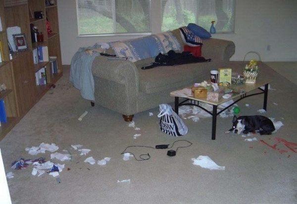 perros-disimulando-destrozos-1