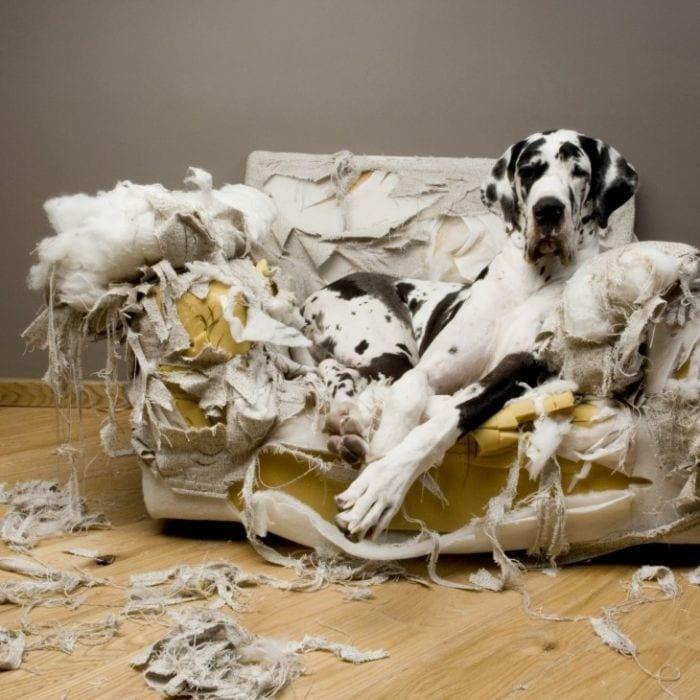 perros disimulando destrozos 15