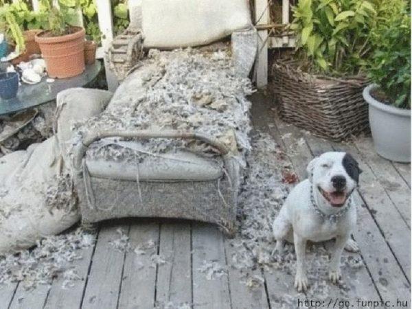 perros-disimulando-destrozos-17
