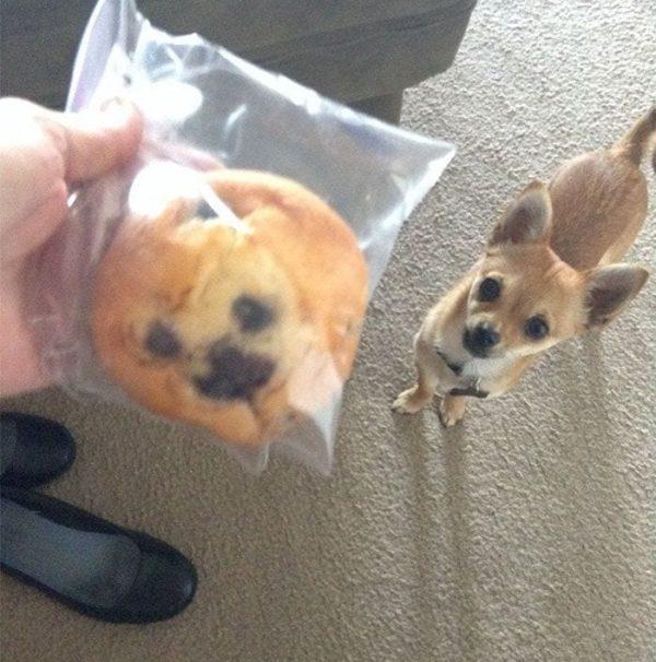 perros que parecen cosas 13