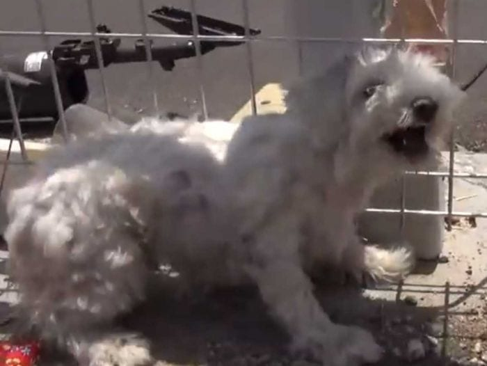 rescate perro vias tren