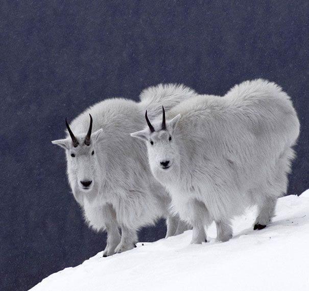 animales-gemelos-10