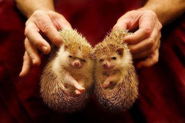 animales-gemelos-11