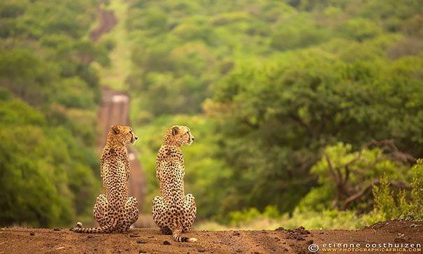 animales-gemelos-24