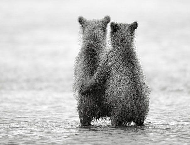 animales-gemelos-26