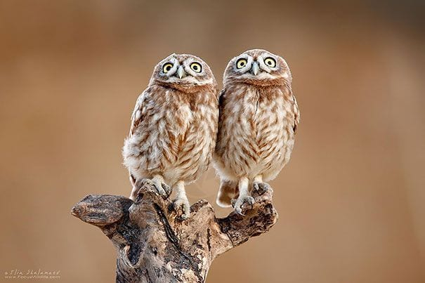 animales-gemelos-7