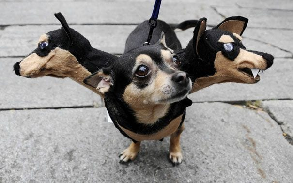 animales-halloween.4
