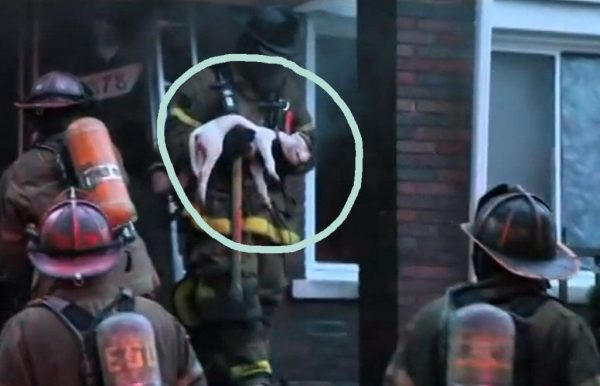 bomberos salvan perros