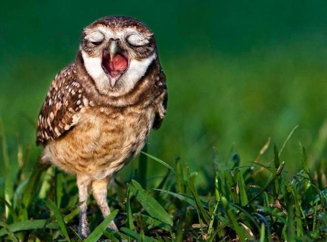 Fotos de aves hermosas 39