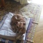 excalibur perro