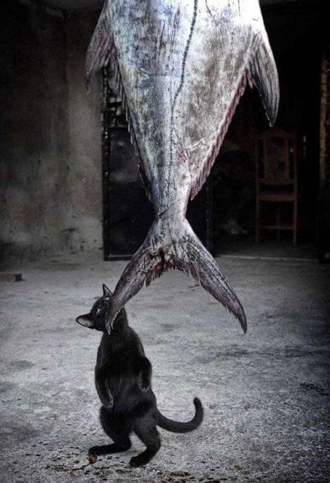 gatos-11