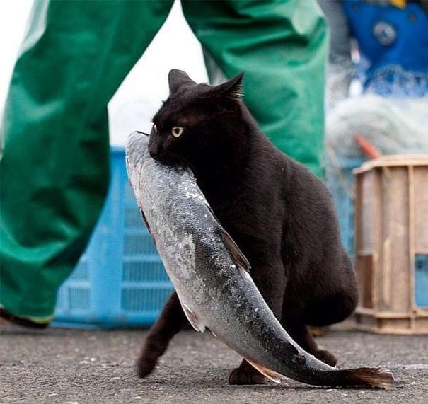 gatos-15
