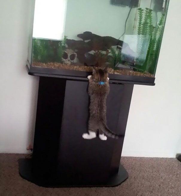 gatos-7
