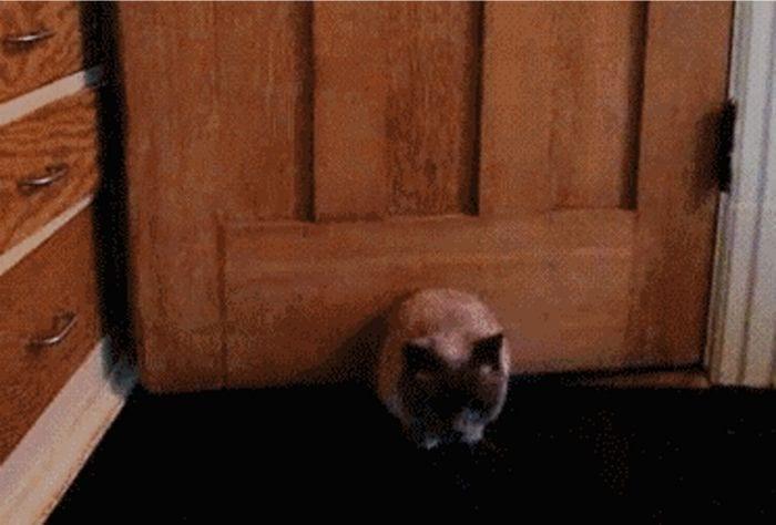 gatos fugandose destacada