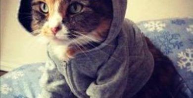 gatos16