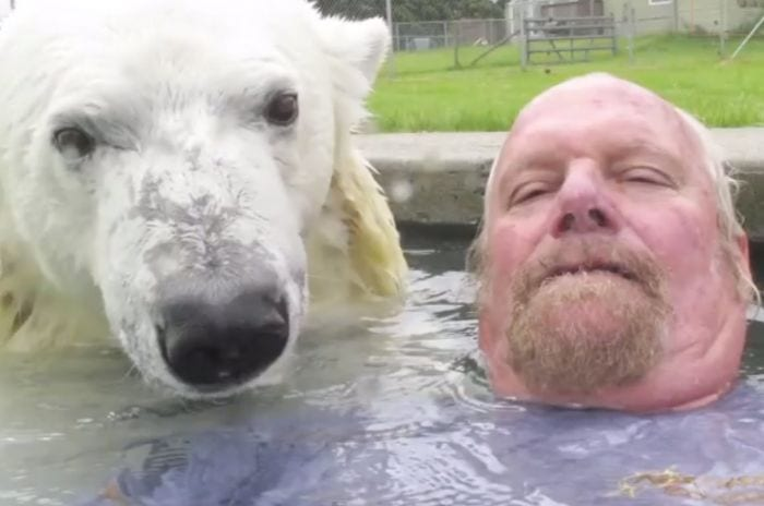 oso polar hombre amigos nadando