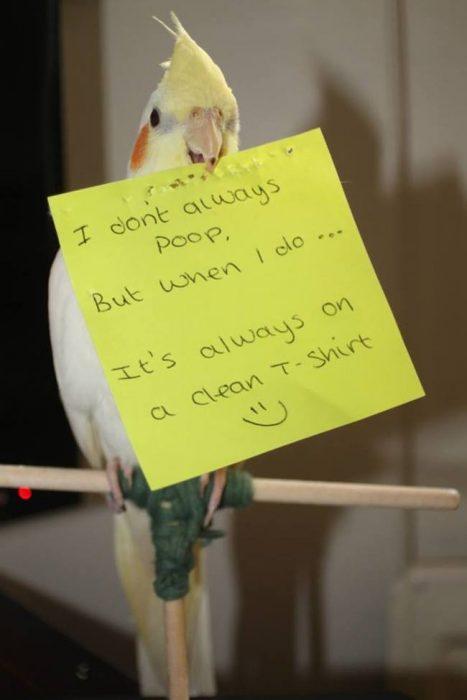 pájaros confiesan