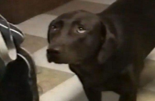 perro-arrepentido