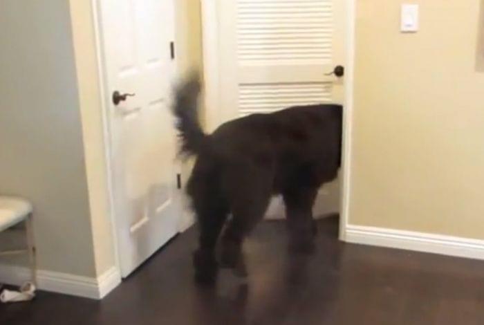 perro escondite bebe