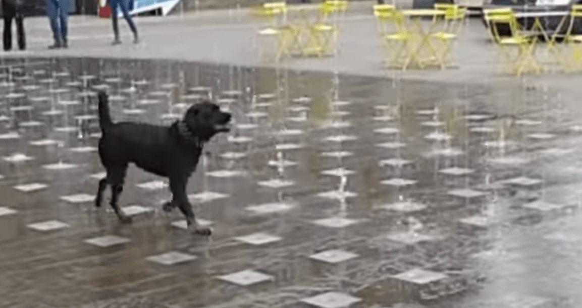 perro fuente