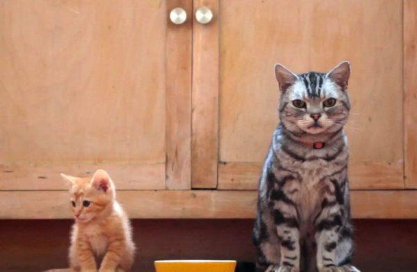 querido gatito I
