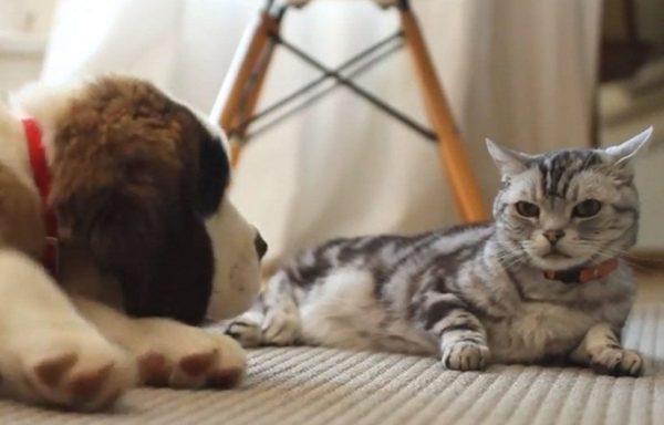 querido gatito dear kitte perro
