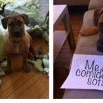 animales culpables destacada