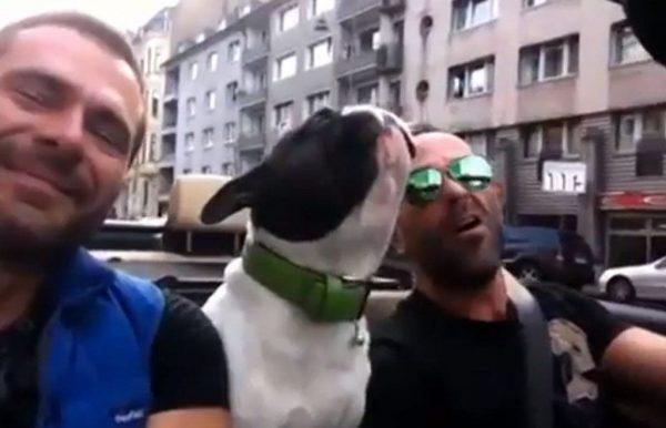 bulldog cantando say something
