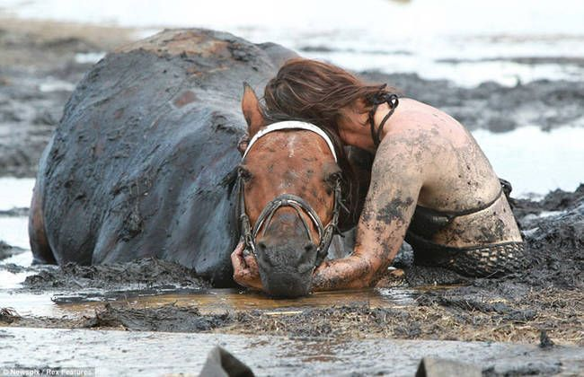 caballo rescate 1