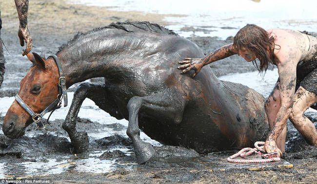 caballo-rescate-10