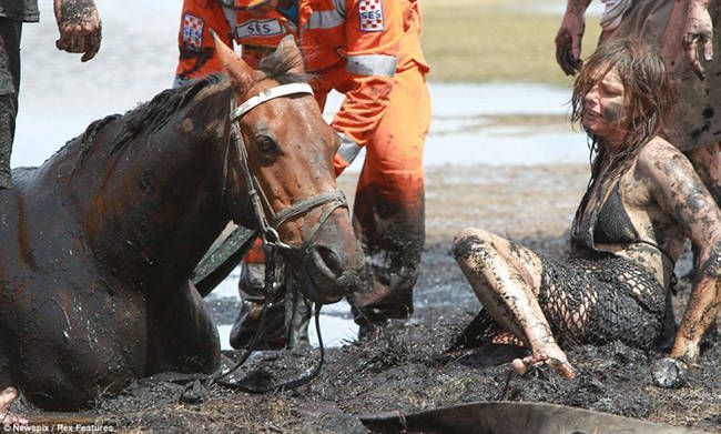 caballo-rescate-7