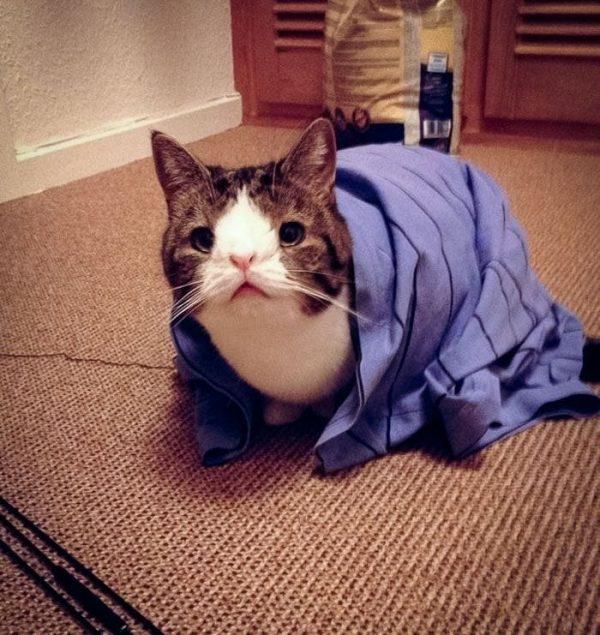 gato-deforme-1