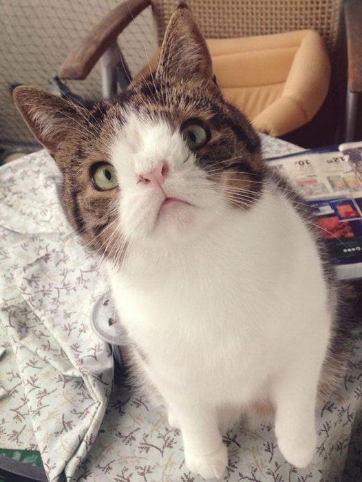 gato-deforme-11