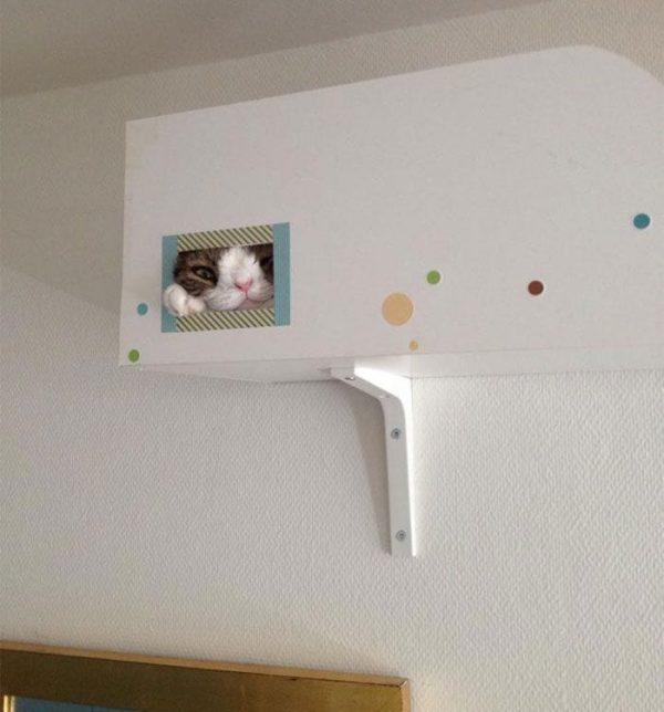 gato-deforme-3