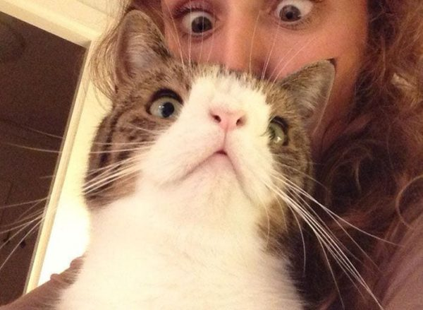 gato-deforme-7