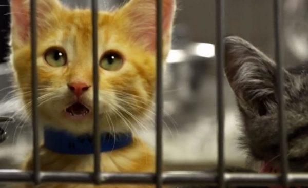 gatos adopcion