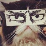 gatos ojos dibujo10
