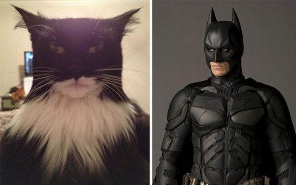 gatos-parecidos01