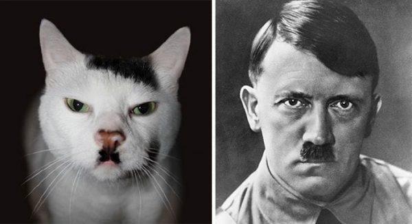 gatos-parecidos02