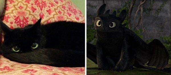 gatos-parecidos03